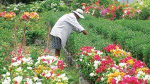 Làng nghề trồng hoa kiểng Long Bình